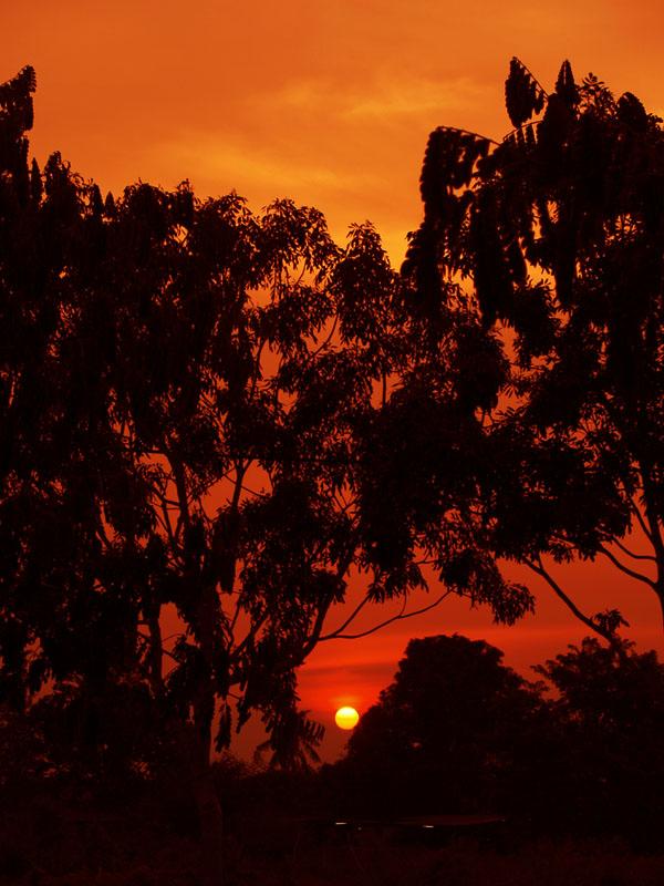 ジャングルに沈む太陽